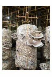Pan India Western Mushroom, Packaging Type: Plastic Bag