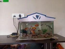 Golden Fish Aquarium Goldfish, 3years, Size: Small