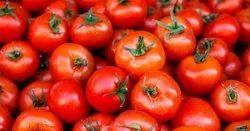 Tamil Nadu Hybrid Tomatoes