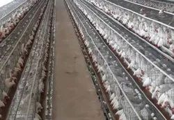 Offline Individual Consultant Poultry Turnkey Project