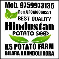 Hindustan Potato Seed