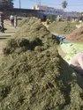 Kalmegh Herb