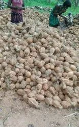 Raw Husked Coconut