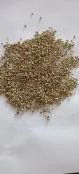 Bajra Green Millet, For Human Food Cattel Feed, High in Protein