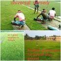 Grass Plantation