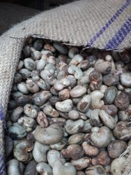 Raw Cashew Nut From Africa