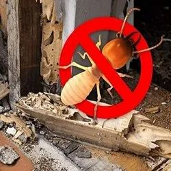Rodent Home Pest Control Services