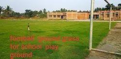 Lawn Grass For School Playground  NO. 1 Brand