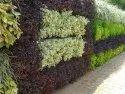 Vertical Wall Garden ,Green Wall Garden /Wall Garden, Green Wall Landscape Services