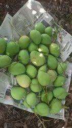 Green Common Badami Mango, Crate