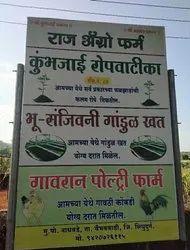 Green Mango Nursery Plant, For Garden, Packaging Type: Bag