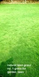Natural Green Grass Carpet