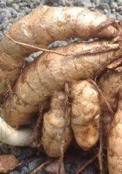 Finger Kasturi White Turmeric Seed, For Medicinal