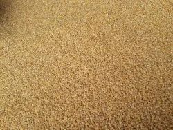 Golden White Foxtail Millets, Packaging Size: 25 Kgs, High in Protein