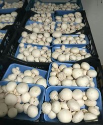 Odisha Button Mushroom, Packaging Type: Ice Pack