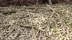 Bamboo Waste