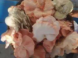 Bagwan Fresh and Dry Mushrooms , Mandla MP