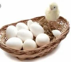 50to60gm White Cobb 430 Hatching Eggs, Packaging Type: Box