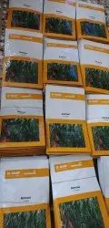 Hybrid Green Armour Chilli Seed BASF, Packaging Type: Sealed Bag 1500 Seeds