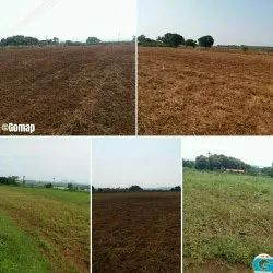 Agriculture Land For Sale, Size/ Area: 150 Gunthe
