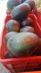 Khandeshi A1 Watermelon, Packaging Size: 5 Kg
