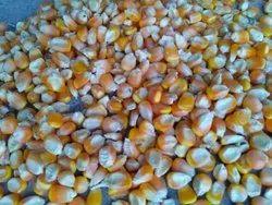 Yellow Dry Maize Mysore