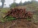 Gana Teak Wood