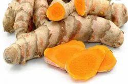 Curcuma Longa Finger Lakadong Turmeric Seeds, For Spices
