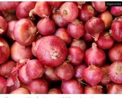 A Grade Tamil nadu Onion, Packaging Size: 50 Kg, Onion Size Available: Small