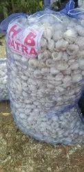 Datra garlic