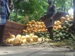 A Grade Whole Pollachi Tender Coconut, Packaging Size: Loose Full truck load