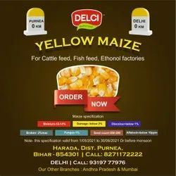 Hybrid Yellow Maize, 14 % Max, Packaging Size: 59 K.g