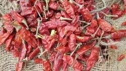 C5 Red Chilli, Packaging Type: Loose