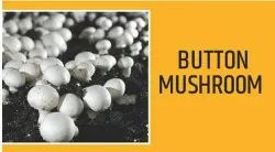 Pure Organic madhya pradesh Button Mushroom, Packaging Type: Packet, Packaging Size: 1kg And 5kg Box
