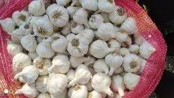 A Grade Garlic, Gujarat