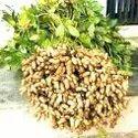Grow Bio Fertilizer