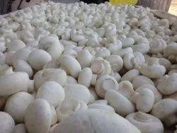 Fresh Button Mushroom, Packaging Type: Carton Box, Packaging Size: 3 Kg