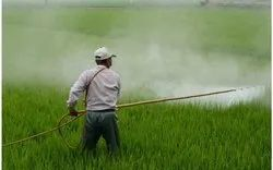 Insecticide License Service, in Pan India