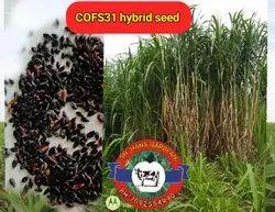 Dried Cofs 31 Hybrid Farm Seeds Fodder Seeds, Packaging Type: Plastic, 5kg