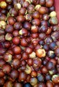 Imported Hash Organic Avocado Seed