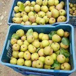 Green Pear Fruit