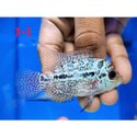 Red Flowerhorn Fish, 2, Size: 10