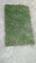 Natural Square Mexican Carpet Grass, For Gardening