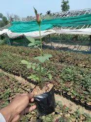 All Type Of Nursery Plant