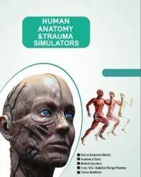 Human Anatomical Models, For Medical, Size: Cuatom