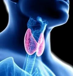 11:00 A.M-8:00P.M. Unisex Thyroid Diet Services, Applicable Age Group: 20-30 Years, Pan India