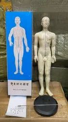 Acupuncture Model-full Body-male 48 Cm