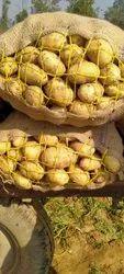 A Grade Uttar Pradesh Potato 3696