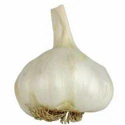 A Grade Garlic
