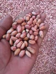 Ground nuts, Packaging Size: 50